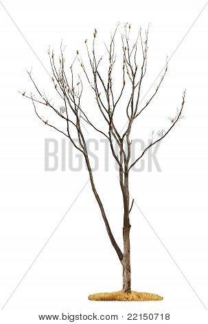 Tree On White Background
