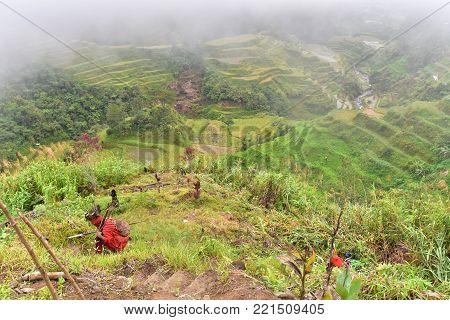 Rice Terraces - Banaue, Philippines. UNESCO heritage