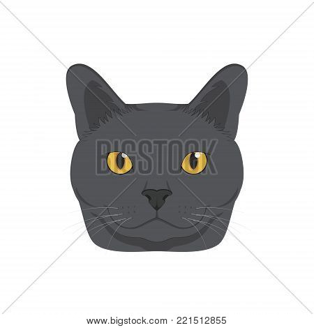 Chartreux cat isolated on white background vector illustration