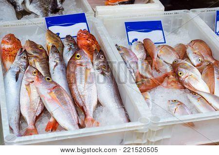 Fresh sea fish, Dorado, sea bass, perch on an ice plateau in the street fish shop. Mediterranean cuisine and seafood delicacies on island Crete, Rethymno, Greece