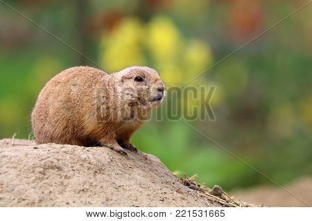 A prairie dog with a colorful background