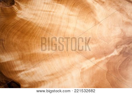 Wood texture. Close-up of a beautiful iridescent and shimmering natural pattern of wooden gnarl.