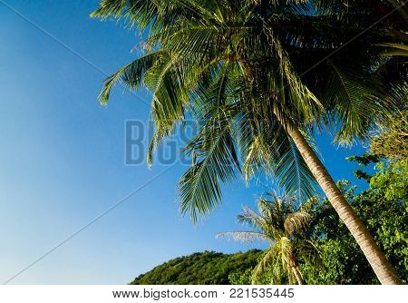 Under Palms Coconut Getaway