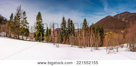 snowy slope with forest in springtime. lovely panorama of mountainous countryside