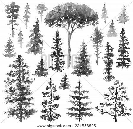 Watercolor painting. Hand drawn illustration. Set of conifers and evergreen trees isolated on white. Fir and pine monochrome sketch.