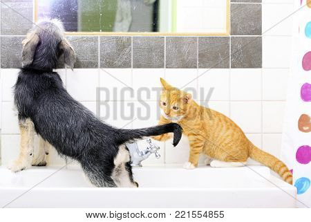 Animals pets at home dog puppy mutt and little red cat kitten playing together in bathroom sink looking at mirror