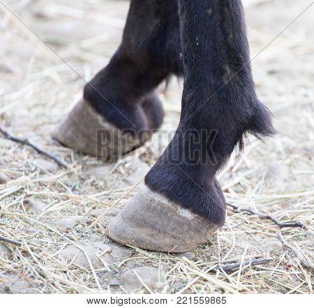 hooves . In the park in nature In the park in nature