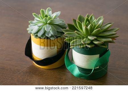 Succulents in diy paper pot. Scandinavian room interior decoration.