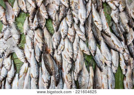 Fresh water fish market, Luang Prabang, Laos