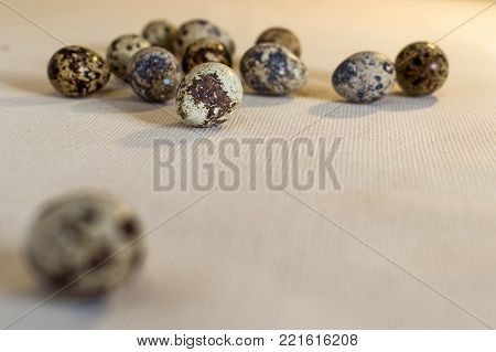 Quail eggs on a linen cloth with the egg not in focus in the foreground. Still life in warm tones, side view, at eye level.