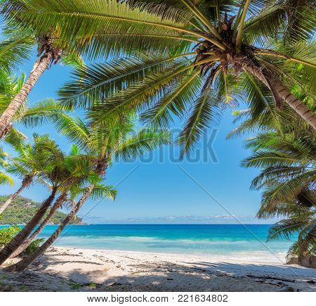 Coconut palm trees on tropical beach in Seychelles.
