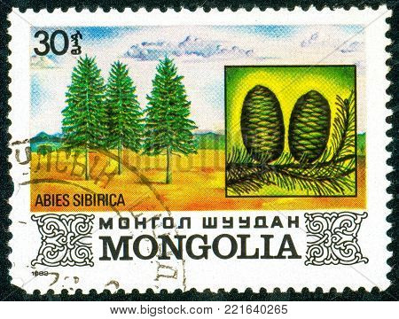 Ukraine - circa 2018: A postage stamp printed in Mongolia shows Siberian fir or Abies sibirica. Cone. Series: Flora. Series: Flora. Circa 1982.