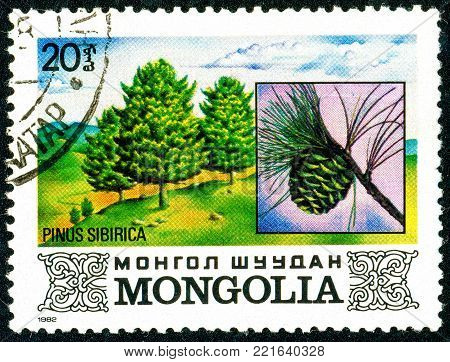 Ukraine - circa 2018: A postage stamp printed in Mongolia shows Siberian pine or Siberian stone pine. Cone. Pinus sibirica. Series: Flora. Series: Flora. Circa 1982.