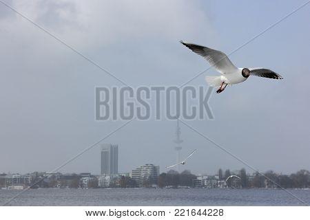 Flying gulls against cityscape on foggy winter day in Hamburg. TV tower in Hamburg.