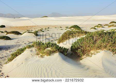 White sand dune of Arher beach on Socotra island at sunset, Yemen