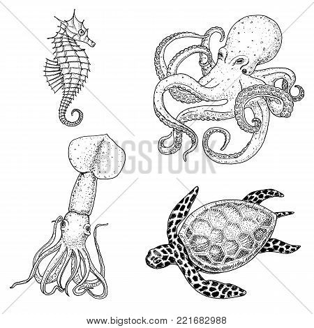 Seafood or sea creature cheloniidae or green turtle and seahorse. octopus and squid, calamari. engraved hand drawn in old sketch, vintage style. nautical or marine. animals in the ocean