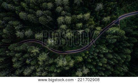 Woodland And Street From Above