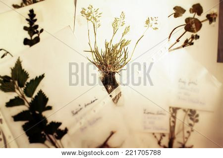 Herbarium botany concept. Blur defocused pressed herbs on paper.