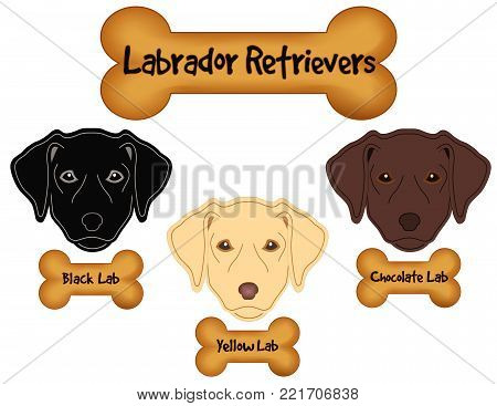 Labrador Retrievers,  Black, Chocolate, Yellow Labs, Dog Bone Treats