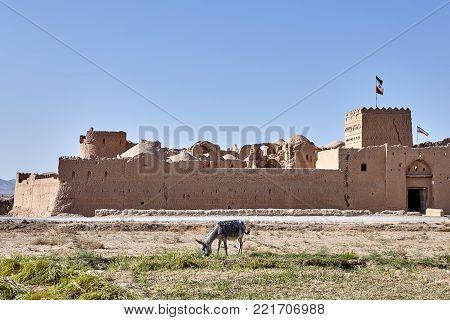 One farmer burro grazing near the antique Fortress Saryazd, near Yazd town, Iran.