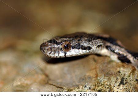 Exploring Snake