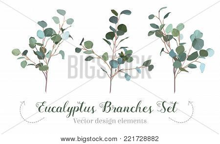 Silver dollar eucalyptus selection branches vector design set. Cute rustic wedding greenery. Mint, blue tones. Watercolor style collection. Mediterranean tree. All elements are isolated and editable