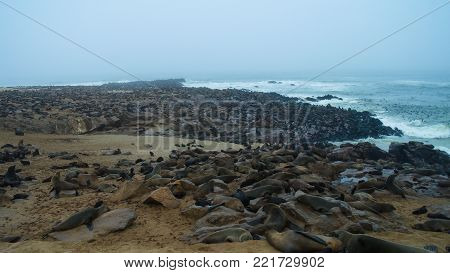 Cape Cross Cape fur seal colony at Namibia