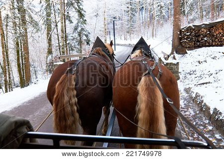 Horse carriage ride through forest. Winter landscape, view from horse carriage.