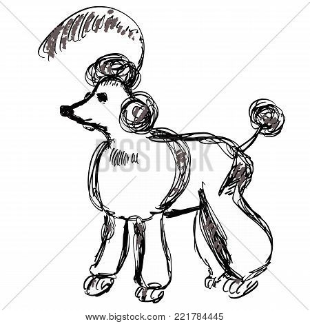 Pretty groomed poodle with a haircut and feather on the head. Dog sketch for prints, posters, design, clothes, kids room decoration