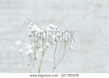 Branch with white flowers on a light blurred background. empty space