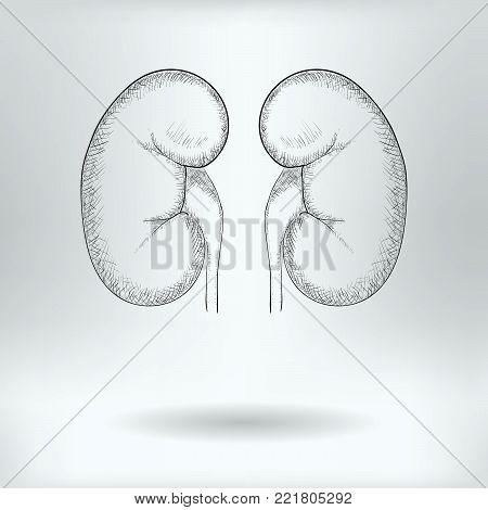 Cartoon Symbol of Kidneys  -  Science Medical Concept -  Drawing Sketch Vector Illustration