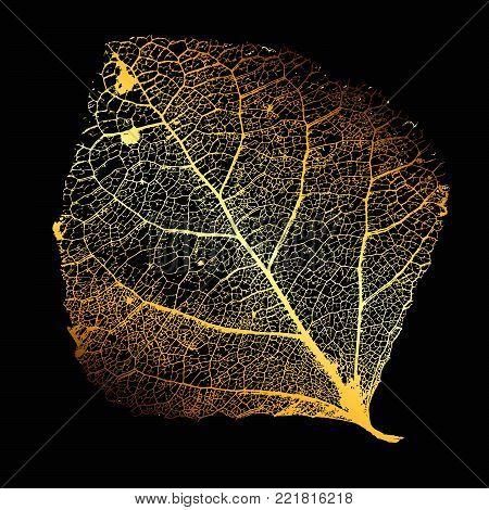 Vector Poplar Leaf Structure Skeletons with Veins