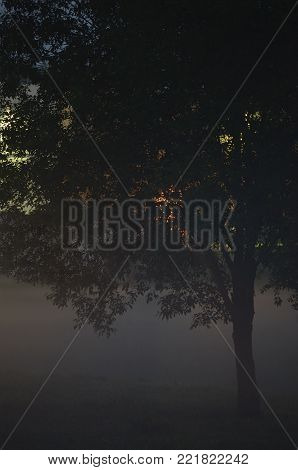 Lonely Single Tree Branches Closeup, Foggy Twilight Mist, Misty Silhouette In Low Fog Dusk, Vertical Bright Background Lit Outdoor Night Scene, Colorful Lights, Loneliness Concept, Outdoors Solitude Metaphor, Backlit Shadows, Deserted Midnight Darkness