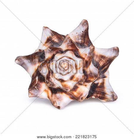 Big beautiful seashell isolated on white background