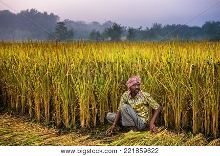 CHITWAN, NEPAL - OCTOBER 24, 2015 : Nepalese man working in a rice field. In Nepal, the economy is dominated by agriculture.