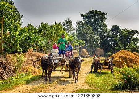 CHITWAN, NEPAL - OCTOBER 24, 2015 : Nepalese people travelling on a wooden cart attached to a pair of bulls. Traditional village life in Nepal.