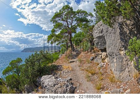 A path along a steep sea shore overgrown with relict pines. Karaul-Oba, Novyy Svet, Crimea.