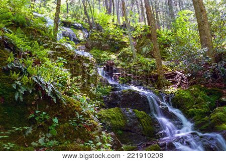 Bright green ferns surround Buttermilk Falls in Stokes State Forest in New Jersey.