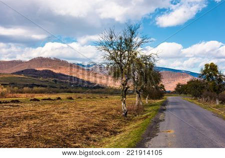 trees along the country road through rural fields. beautiful mountainous landscape in springtime