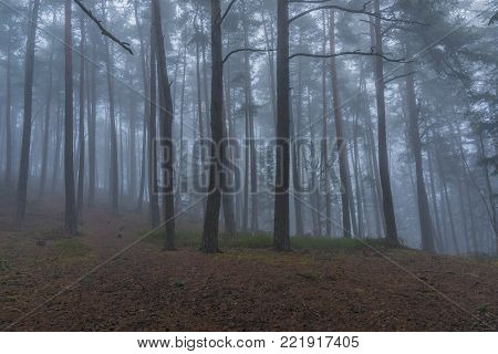 Forest and trees near Prachatice town in cold winter south Bohemia