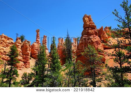 Red hoodoo spires and green ponderosa pines in Bryce Canyon National Park