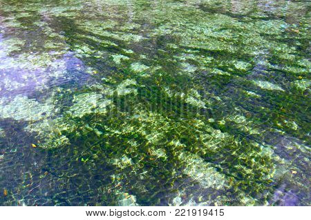 Clear waters of Wekiwa Springs State Park in central Florida