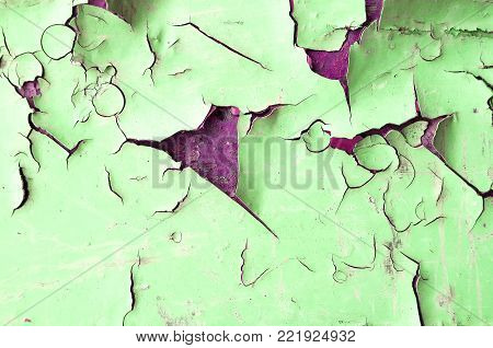 Texture background of green texture peeling paint on the wooden texture surface. Peeling paint texture, background with texture of peeling paint. Peeling paint of light green color on the wooden texture surface