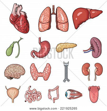 Human organs cartoon icons in set collection for design. Anatomy and internal organs vector symbol stock  illustration.