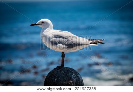 White and grey seagull on rock by the sea