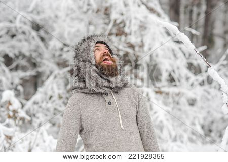 Bearded man with open mouth in snowy forest. Hipster in fur hat, thermal jacket, beard warm in winter. Skincare, beard care in winter. Temperature, freezing, cold snap. Vacation, rest, activity.