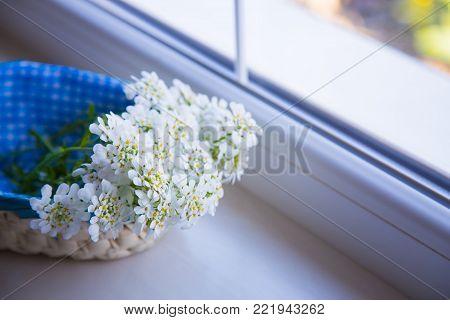 Beautiful little bouquet of white Iberis near window. Spring composition in daylight.