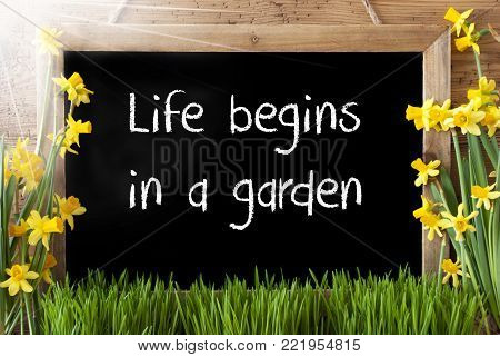 Blackboard With English Text Life Begins In A Garden. Sunny Spring Flowers Nacissus Or Daffodil With Grass. Rustic Aged Wooden Background.