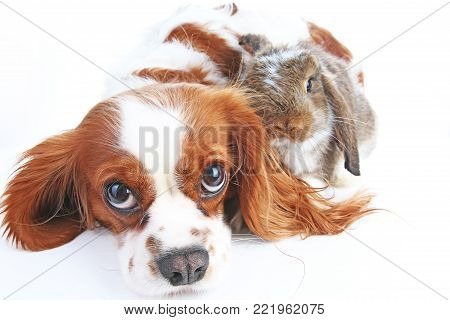 Animal friends. True pet friends. Dog rabbit bunny lop animals together on isolated white studio background. Pets love each other. Funny pets.