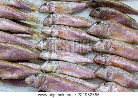 Freshly caught European sprats fish and ice in the box on the counter at the fish shop. European fishes. Horizontal. Top view. Close.